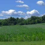 Clouds-Corn-Oats