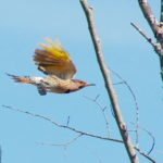 Flicker-in-flight