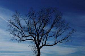 Griffis-Tree