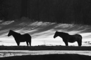 Horses-bw