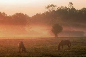 Horses_trenton